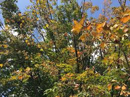 New York State Fall Foliage Map by Blog Things To Do In Fulton County Ny