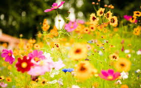 Colorful Pictures Beautiful Colorful Flowers 6991521