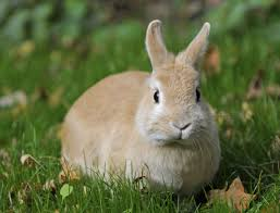 the meaning and symbolism of the word rabbit