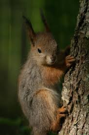 984 best squirrels images on pinterest animals squirrels and