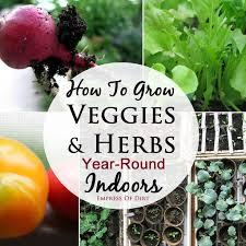 Gardening Pictures Best 25 Indoor Gardening Ideas On Pinterest Water Plants