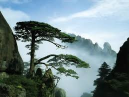 geography china has more than 2 800 different kinds of trees