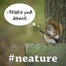Neat Meme - 13 best neature walk images on pinterest t shirts aspen and