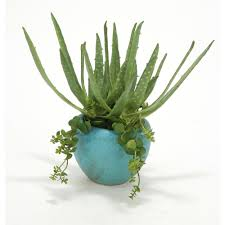 aloe and hanging succulents in large turquoise planter pack 2