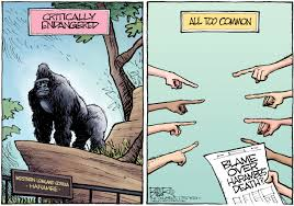 Nate Beeler Cartoons Cartoons Of The Day The Death Of Harambe The Gorilla At