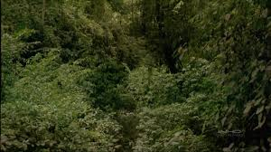 Under Canopy Rainforest by Imax Tropical Rainforest Youtube
