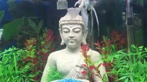 buddha aquarium 2