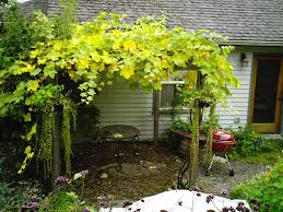 diy pergola designs grape vines wooden pdf modern wood desk plans