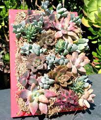22 best wall and air gardens images on pinterest vertical