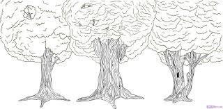 drawn tree rainforest pencil and in color drawn tree rainforest