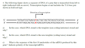 4 the following figure shows a segment of dna of chegg com
