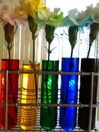 Best Flower Food Best Rainbow Roses Science Fair Project 84 About Remodel With