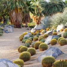 Desert Landscape Ideas For Backyards by Backyard Cactus Garden Interesting Just Planted Cactus Garden