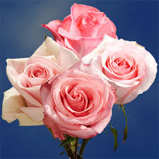 global roses pink roses for sale global