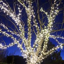 outdoor solar lights for trees wayfair