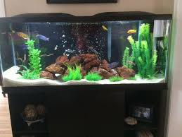 Live Plants In Community Aquariums by Tips For Cleaning And Maintaining Your Tank Filter