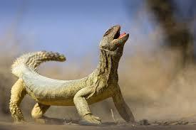 más de 25 ideas increíbles sobre big lizard en pinterest