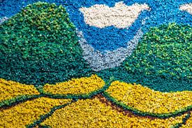 free images flower asphalt crop soil agriculture coral reef