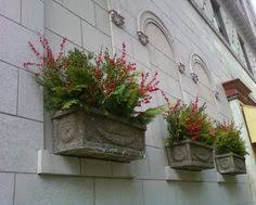 Plants For Winter Window Boxes - evergreen mixed box winter plants pinterest evergreen