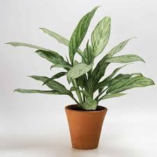 indoor house plants low light darxxidecom