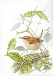 best 25 bird sketch ideas on pinterest bird drawings sketches