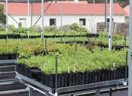 native plant nursery pa green garden nursery thenurseries