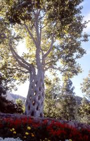 gilroy gardens family theme park gilroy ca 128 best tree shaping images on pinterest garden ideas tree art