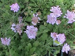 cut flower garden plant list south carolina garden guru