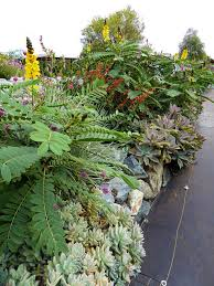buy native plants online annie u0027s annuals and perennials retail and online nursery buy