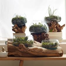 5 places to buy a home terrarium spruce up your home with one of