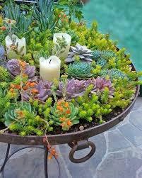 planter for succulents succulent gift ideas edible succulent planters reddit sotehk com