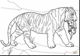 exceptional tiger coloring pages coloring pages dokardokarz net