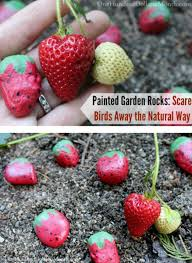 Painted Rocks For Garden by Painted Garden Rocks Scare Birds Away The Natural Way One