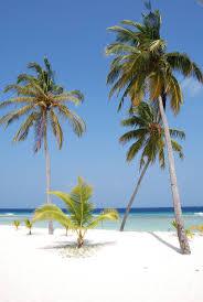 62 best maldives u2013 ari atoll images on pinterest island resort