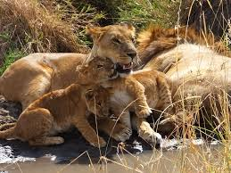 african safari animals africa has a way of getting into your heart and soul u2013 a tanzania