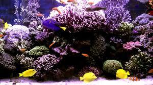 3 hours of beautiful coral reef fish relaxing ocean fish