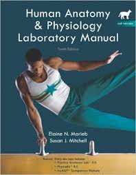 Anatomy And Physiology Exercise 10 A U0026p Lab Manual Answers Marieb 10 Best Medical Doctoral Accurate