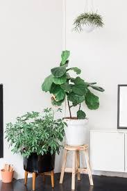 biggest house plants tour a stylist scientist s sunny plant filled chicago loft