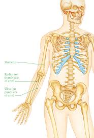 Picture Of Anatomical Position Human Anatomy For The Artist February 2012