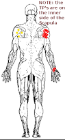 How To Palpate Subscapularis The Subscapularis A Little Known Muscle Punti Trigger Com