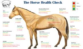 a healthy horse is a happy horse ecoequine page 2