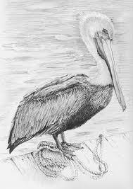 pelican art print bathroom decor animal sketches beach
