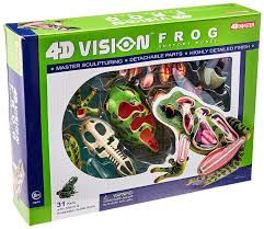 amazon com 4d vision frog anatomy model toys u0026 games