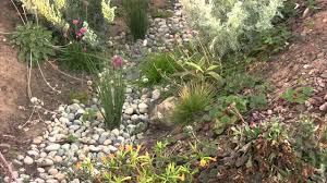 native plants for rain gardens swale u0026 rain garden how to youtube