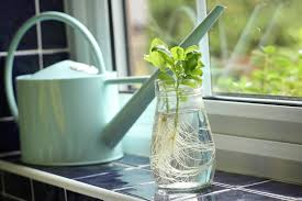10 Vegetables U0026 Herbs You by 10 Vegetables U0026 Herbs You Can Regrow At Your Home Forever Muddlex