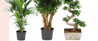 plantes bureau juste à temps
