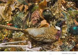 pheasant camouflaged in tree picture