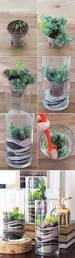 2785 best succulents images on pinterest gardening flowers and