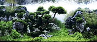 japanese aquascape hardscape with crystalwort trees aquascape design 1 pinterest