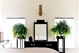Plants For The Bedroom by Choosing The Best Indoor Plants For Your Interior
